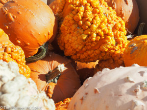 Green Bluff Orchard- pumpkins