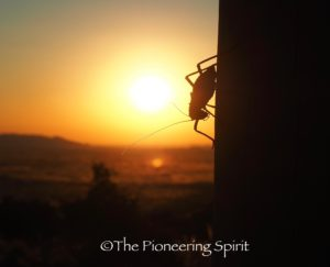 A cricket at sunset