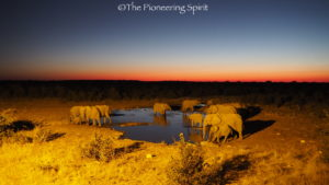 Elephant at the camp waterhole at night