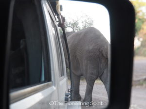 Our first close elephant encounter