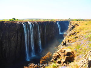Victoria Falls and wild flowers