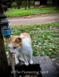 Butterscotch, the resident kitty at Morrungulo