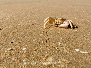 A crab on the beach.