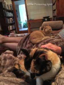 Johannesburg: a couch and kitties